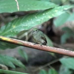 Costa Rica birding app