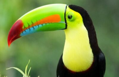 Too Early to Plan a Birding Trip to Belize?