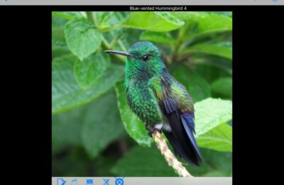 Updates and Expectations for Costa Rica, Belize, and Panama Birding Apps
