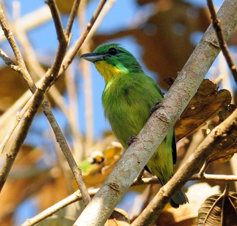 Getting Ready to Update Birding Apps for Costa Rica and Panama
