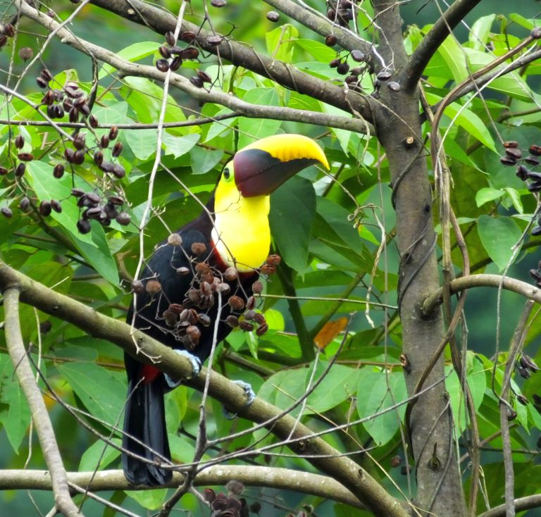 Not Sure What to do in Panama? Go Birding!
