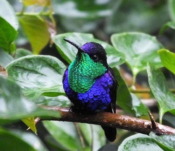 """Not All Hummingbirds are """"Hummingbirds"""""""