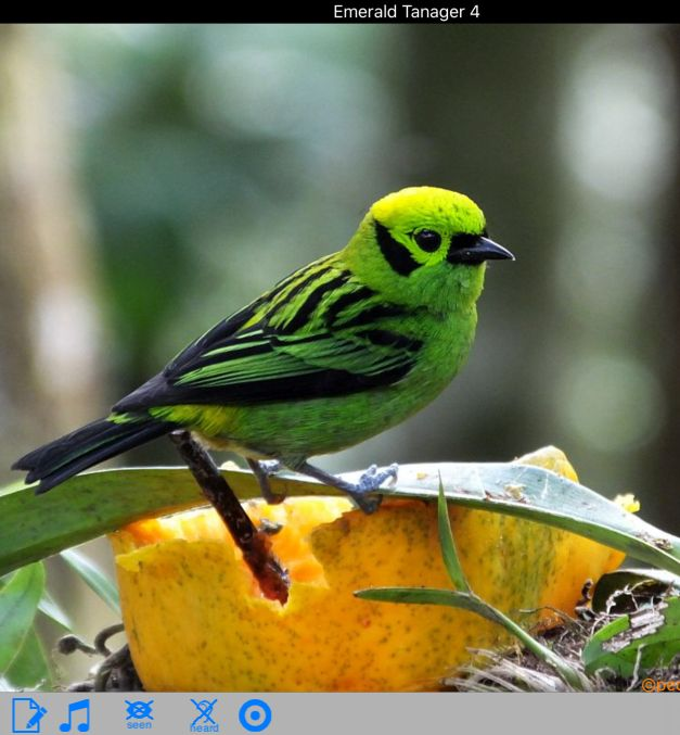 Recent Updates to Birding Apps for Costa Rica, Panama, and Belize