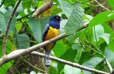 Trogon Photo Shoots in Belize